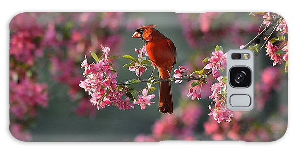 Spring Morning Cardinal Galaxy Case by Nava Thompson