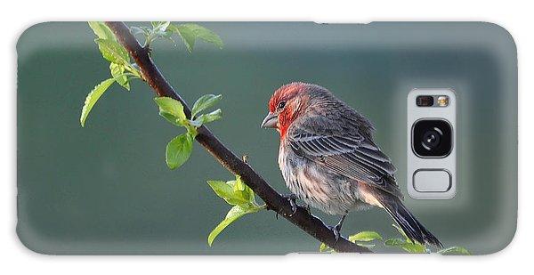 Song Bird In Spring Galaxy Case