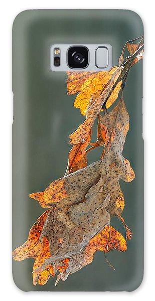 Spring Sun On Winter Oak Leaves Galaxy Case