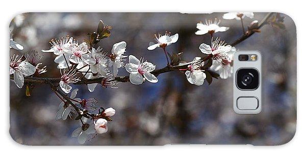 Spring White Blossom Galaxy Case