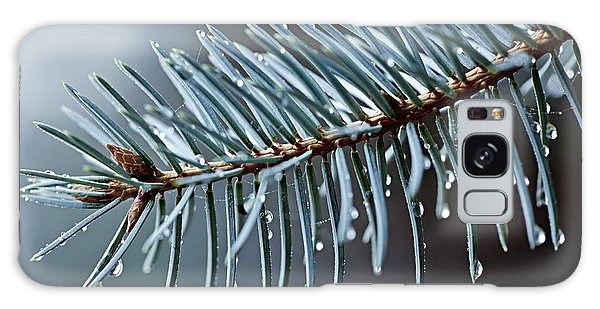 Pine Branch Galaxy Case - Spruce Needles With Water Drops by Elena Elisseeva