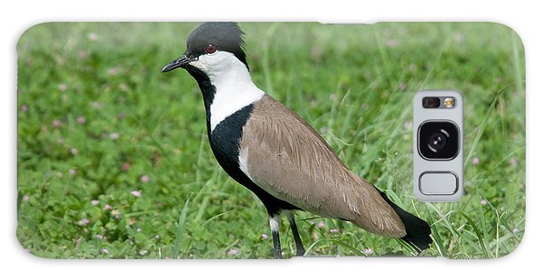Lapwing Galaxy Case - Spur-winged Plover by Nigel Downer