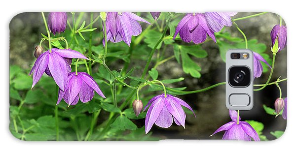 Aquilegia Galaxy Case - Spurless Columbine (aquilegia Ecalcarata) by Brian Gadsby/science Photo Library