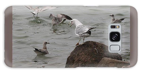 Squabbling Gulls-ii Galaxy Case by Patricia Overmoyer