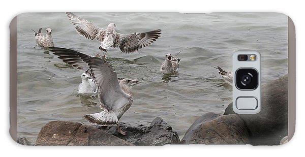 Squabbling Gulls Galaxy Case