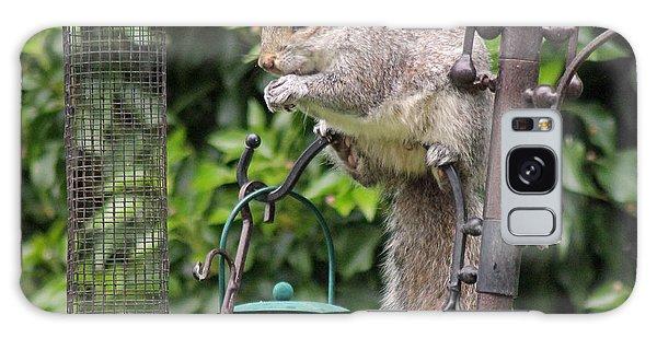 Squirrel Eating Nuts Galaxy Case