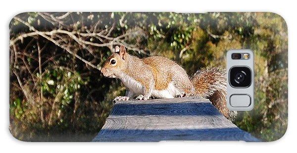 Squirrel On A Railing Galaxy Case by Michele Kaiser