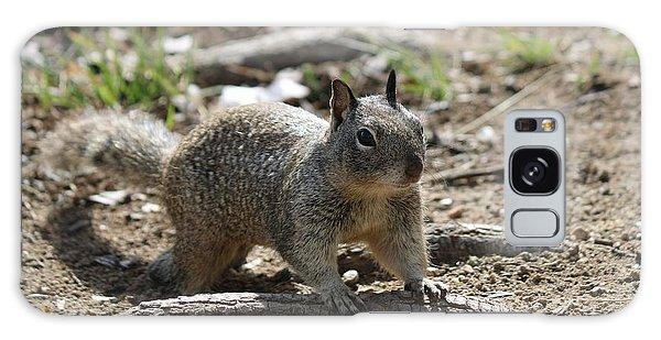 Squirrel Play  Galaxy Case