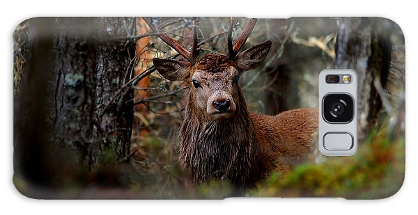 Stag In The Woods Galaxy Case