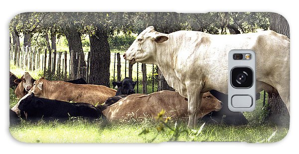 Standing Watch Cattle Photographic Art Print Galaxy Case by Ella Kaye Dickey