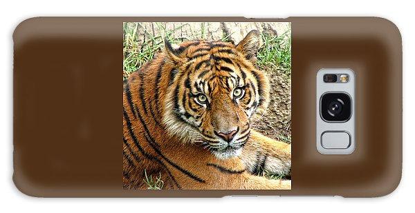 Staring Tiger Galaxy Case
