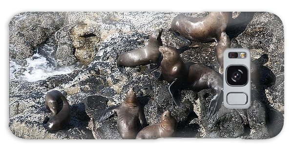 Steller Sea Lion - 0030 Galaxy Case by S and S Photo