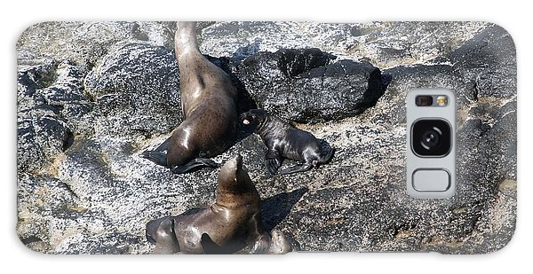 Steller Sea Lion - 0033 Galaxy Case by S and S Photo
