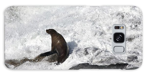 Steller Sea Lion - 0034 Galaxy Case by S and S Photo