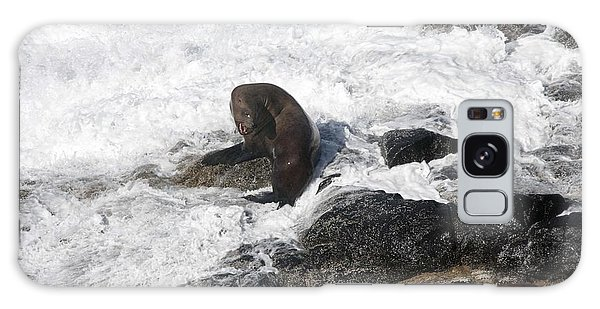 Steller Sea Lion - 0035 Galaxy Case by S and S Photo