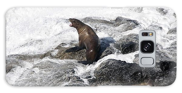 Steller Sea Lion - 0036 Galaxy Case by S and S Photo
