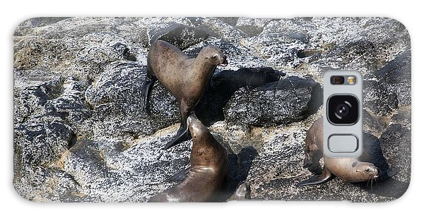 Steller Sea Lion - 0037 Galaxy Case by S and S Photo