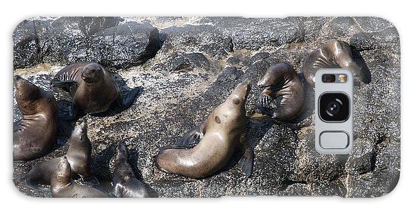 Steller Sea Lion - 0038 Galaxy Case by S and S Photo