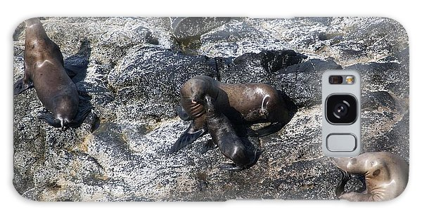 Steller Sea Lion - 0041 Galaxy Case by S and S Photo