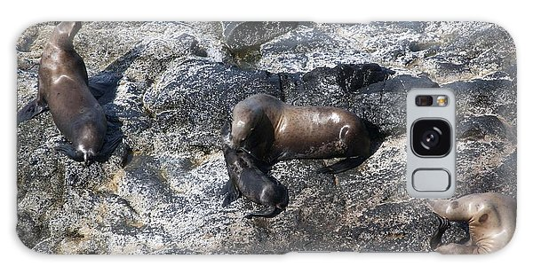 Steller Sea Lion - 0042 Galaxy Case by S and S Photo