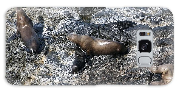 Steller Sea Lion - 0043 Galaxy Case by S and S Photo