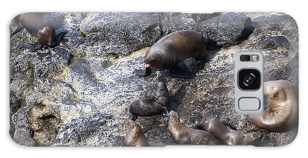 Steller Sea Lion - 0044 Galaxy Case by S and S Photo