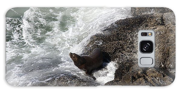 Steller Sea Lion - 0045 Galaxy Case by S and S Photo