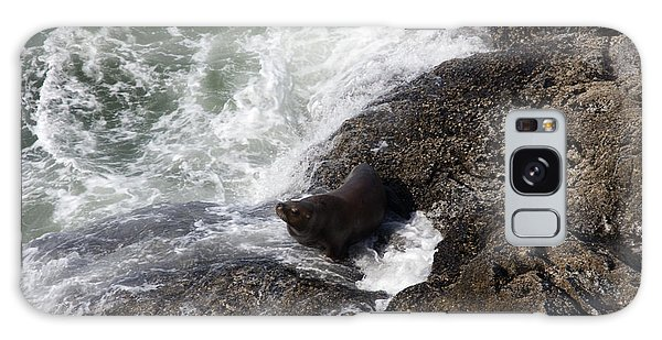 Steller Sea Lion - 0046 Galaxy Case by S and S Photo