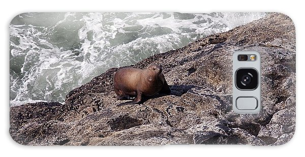 Steller Sea Lion - 0029 Galaxy Case by S and S Photo