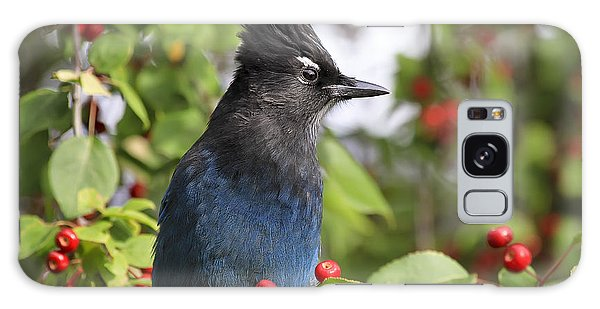 Steller's Jay And Red Berries Galaxy Case