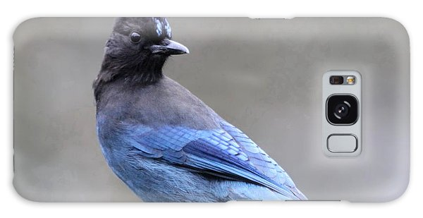 Steller's Jay Galaxy Case
