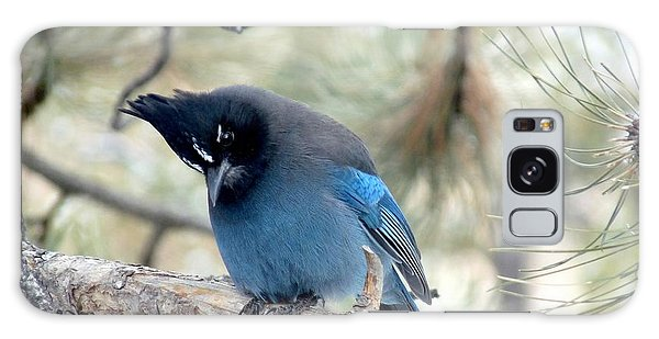 Steller's Jay Looking Down Galaxy Case