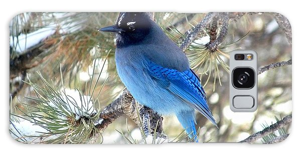 Steller's Jay Profile Galaxy Case