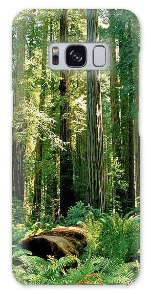 Stout Grove Coastal Redwoods Galaxy Case
