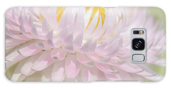 Strawflower In Soft Focus Galaxy Case by A Gurmankin