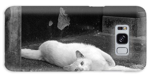 Street Cat Galaxy Case