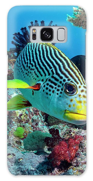 Striped Sweetlips On A Reef Galaxy Case