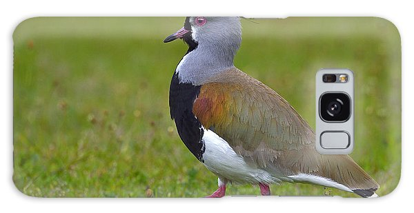 Lapwing Galaxy Case - Strutting Lapwing by Tony Beck