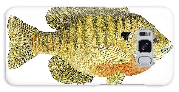 Study Of A Bluegill Sunfish Galaxy Case