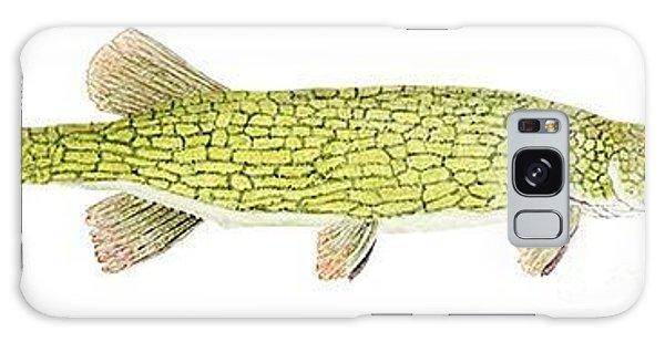 Study Of A Chain Pickerel Galaxy Case