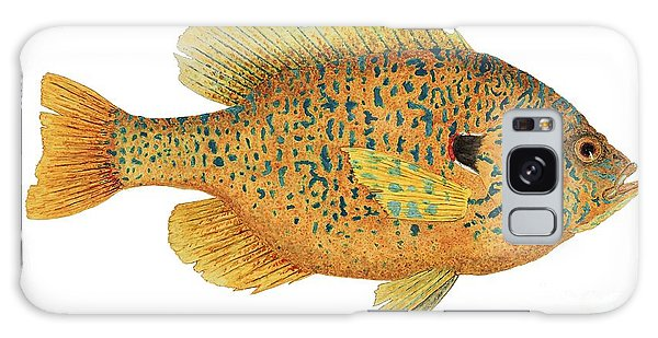 Study Of A Male Pumpkinseed Sunfish In Spawning Brilliance Galaxy Case