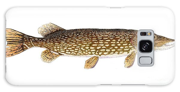 Study Of A Northern Pike Galaxy Case