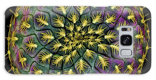 Cacti Galaxy Case - Sulcorebutia Rauschii by Victor Mozqueda