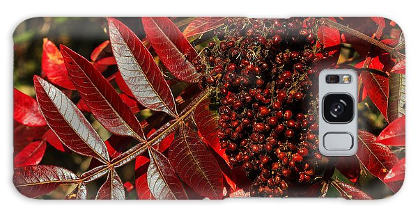 Sumac At Prime Hook Galaxy Case by Robert Pilkington