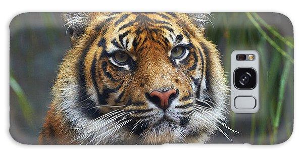 Martin Galaxy Case - Sumatran Tiger by Martin Willis