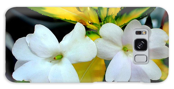 Sun Patiens Spreading White Variagated Galaxy Case