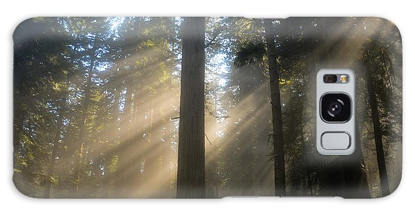 Sun Through The Redwoods Galaxy Case