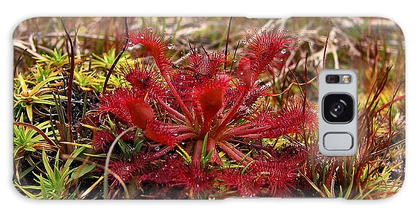 Sundew.  Galaxy Case