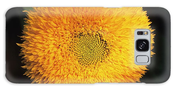 Helianthus Annuus Galaxy Case - Sunflower by Ann Pickford/science Photo Library