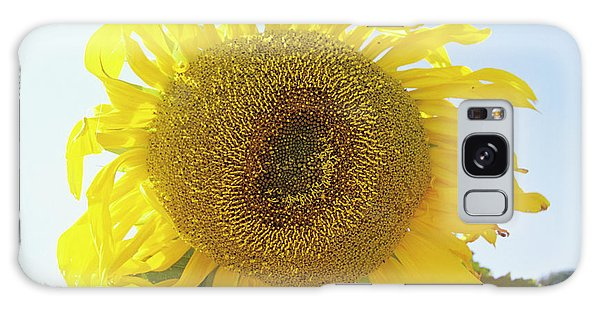 Helianthus Annuus Galaxy Case - Sunflower by Duncan Smith/science Photo Library
